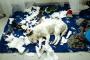Cómo detener a los perros de la masticación destructiva