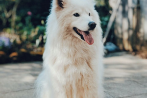 Triquinosis en perros