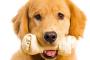 Alimentando a su perro huesos carnosos crudos: ¿es seguro?