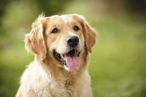 Enfermedad cardíaca del nodo sinusal en perros
