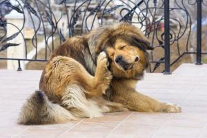 ¿Mi perro tiene una reacción alérgica al analgésico?
