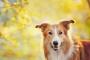 Previniendo la enfermedad de Lyme en mascotas