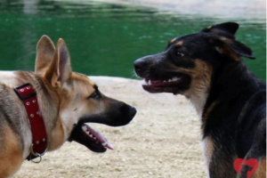 ¿Qué debería pensar antes de llevar mi perro a un parque para perros?