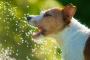4 maneras de hacer que el agua del grifo sea segura para su mascota