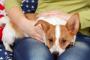 ¿Pueden los perros leer las emociones?