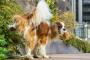 Todo lo que debe saber sobre levantamiento de piernas en perros
