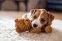 Cómo enseñar a tu perro a temblar