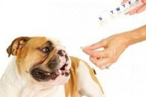 Envenenamiento por reemplazo hormonal en perros
