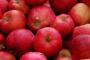 Lista de verificación de alimentos saludables: manzanas para perros