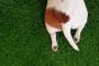 ¿Por qué los perros tienen colas?