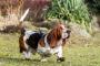 Razas de perros que sufren de problemas en los párpados