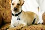 Consejos para los primeros 30 días de adopción de perros