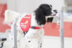 Temperatura normal, corazón y tasas respiratorias en perros