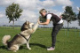 Seis razones por las que vale la pena entrenar a tu perro o cachorro