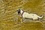 Peligros en el agua para perros