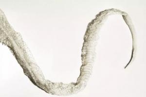Señales de que su serpiente está apunto de mudar la piel