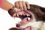 Desarrollo Molar Anormal en Perros