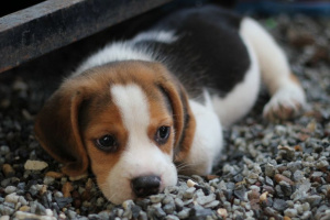 ¿Por qué mi perro ... siempre se ve triste?