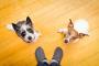 ¿Tu perro salta a los invitados? Cómo entrenarlo para que se detenga
