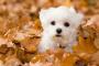 Identificación y tratamiento de tenias en perros