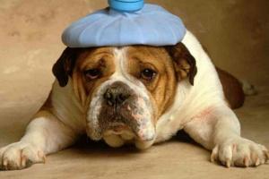 Úlceras estomacales en perros