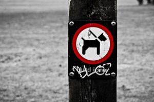 Cómo sostener correctamente una correa de perro.