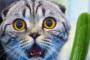 Desmayo en Gatos
