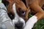 Exceso de álcali en la sangre en los perros