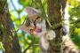 Mantener a tus mascotas seguras en el jardín este verano