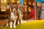 Nueva Ley exige que todas las tiendas de mascotas vendan perros y gatos de rescate solamente.