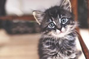 Controlando a los gatitos: primeras 6 semanas de vida
