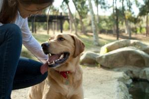 ¿Cómo puedo limitar las posibilidades de que mi perro tenga diabetes?
