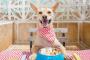 Hablemos de nutrición para perros: 6 nutrientes esenciales para perros