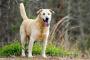 Agresión en perros hacia personas conocidas