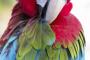¿Necesita su ave ser rociada?