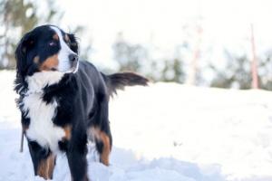 Diversión en la nieve: formas de jugar con tu perro en invierno.