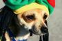 Los perros son más susceptibles a relajarse con música reggae