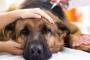 Rabia en perros: síntomas, causas y prevención.