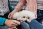 Piedras en la vejiga de oxalato de calcio en perros