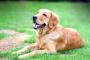 Sarpullido debido al contacto con irritantes en perros