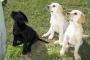 Obtenga consejos rápidos para entrenar a su perro o cachorro