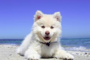 ¿Perrito respirando rápido? 7 hechos fascinantes (y qué hacer!)