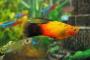 Trastornos oculares comunes en peces