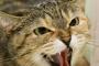 Cómo evitar la agresividad de los gatos hacia otra mascota