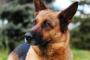 """Un dolor en la parte posterior: 5 señales de que su perro tiene """"problemas a tope"""""""