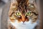 Presión arterial alta en los gatos