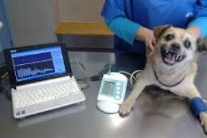 Endurecimiento y bloqueo de las arterias en perros