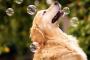 Adopte estos hábitos para mantener a su mascota saludable