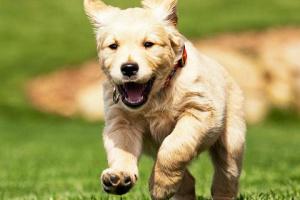 Perro corre maraton!