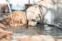 ¿Su perro ignora el cuenco de agua? 5 maneras furtivas de mantener a tu cachorro hidratado